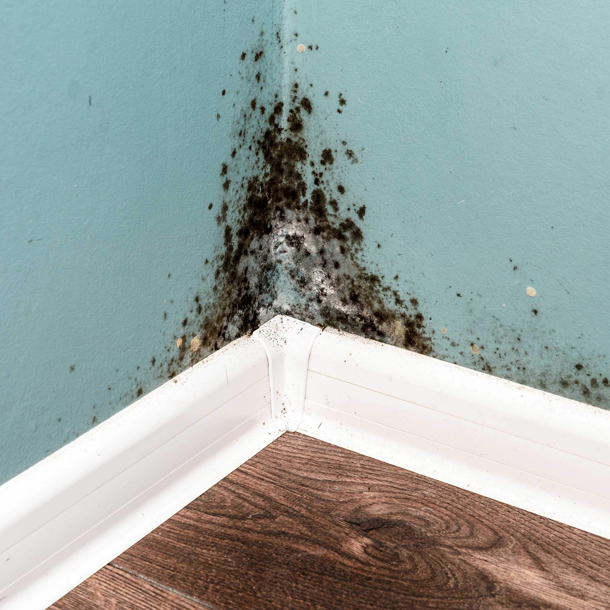 Guide to Mold Remediation after a Flood